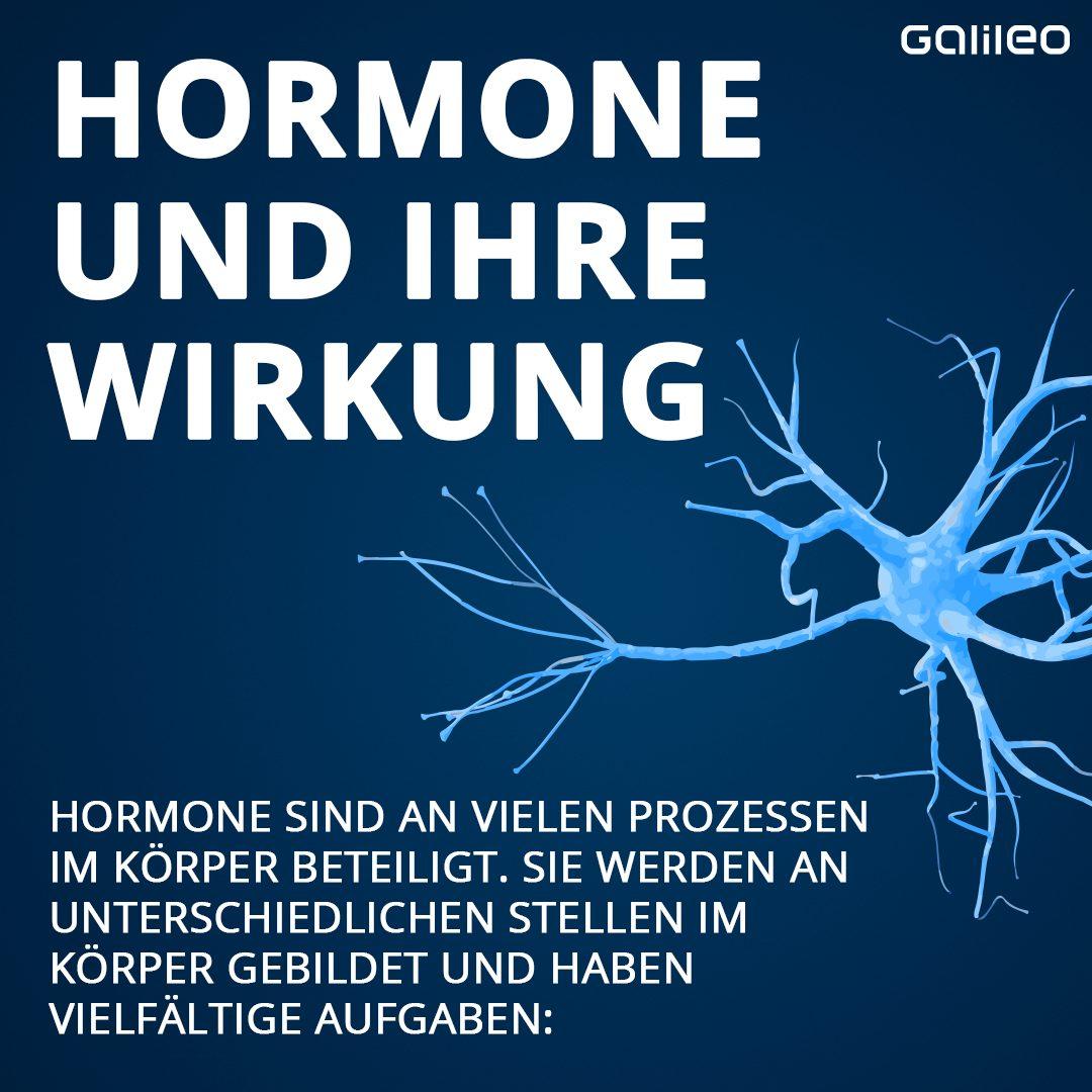 Hormone und ihre Wirkung auf den Körper