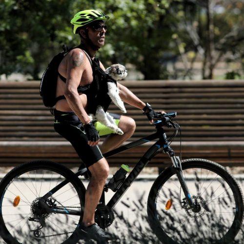 Ein Mann fährt mit seinem Hund auf einem Fahrrad durch einen Park in Madrid. Am Donnerstag wird auch dort eine Hitzewelle eintreffen, die bis mindestens Samstag in weiten Teilen Spaniens Temperaturen von 40 Grad hinterlassen wird.