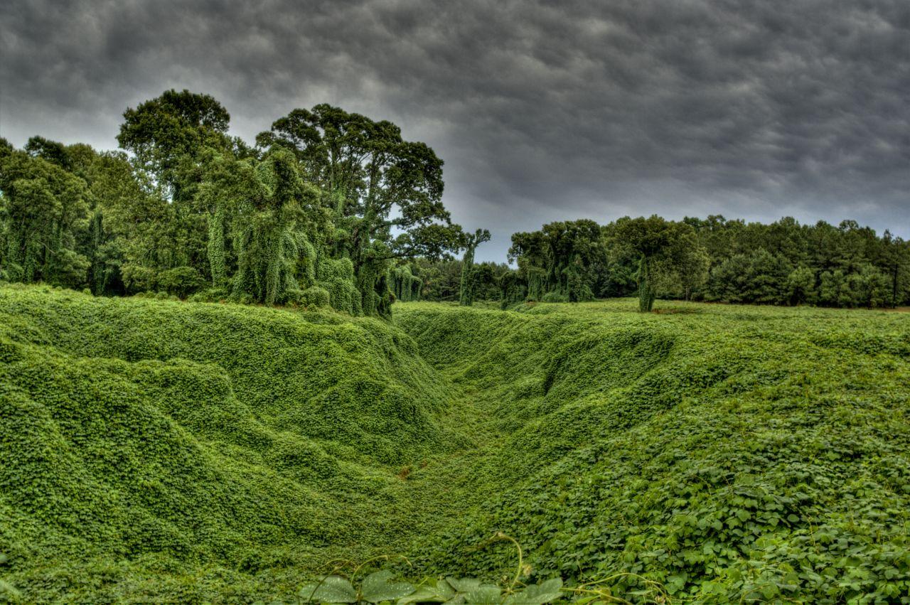 Kuzu-Pflanzen bedecken ein ganzes Tal