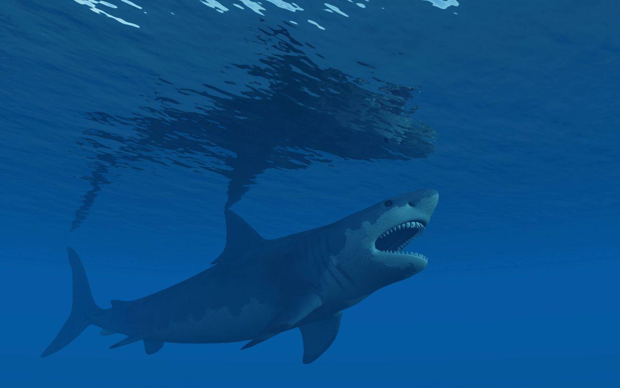 Megalodon: Die Wahrheit über den riesigen Urzeit-Hai