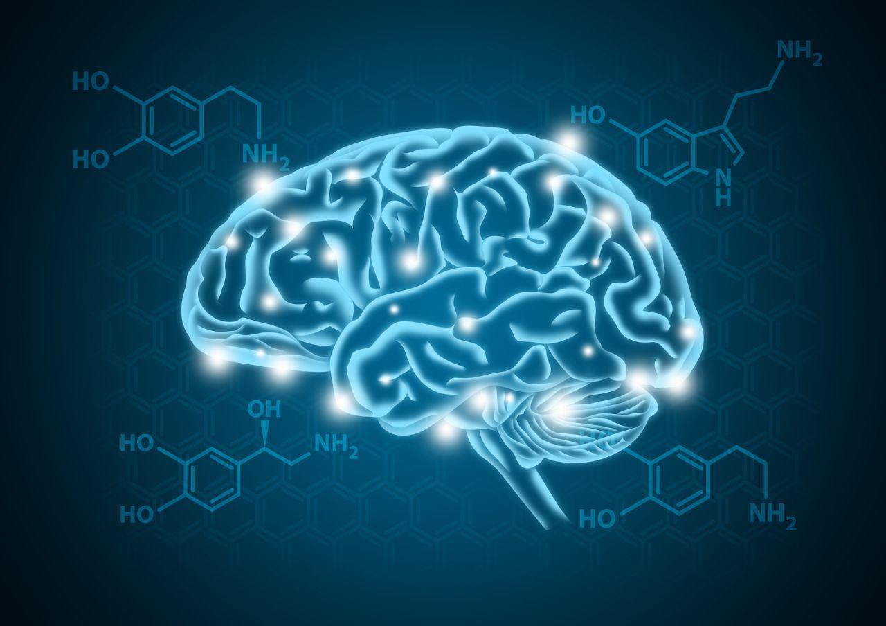 Biochemische Reaktionen von Neurotransmittern im Gehirn