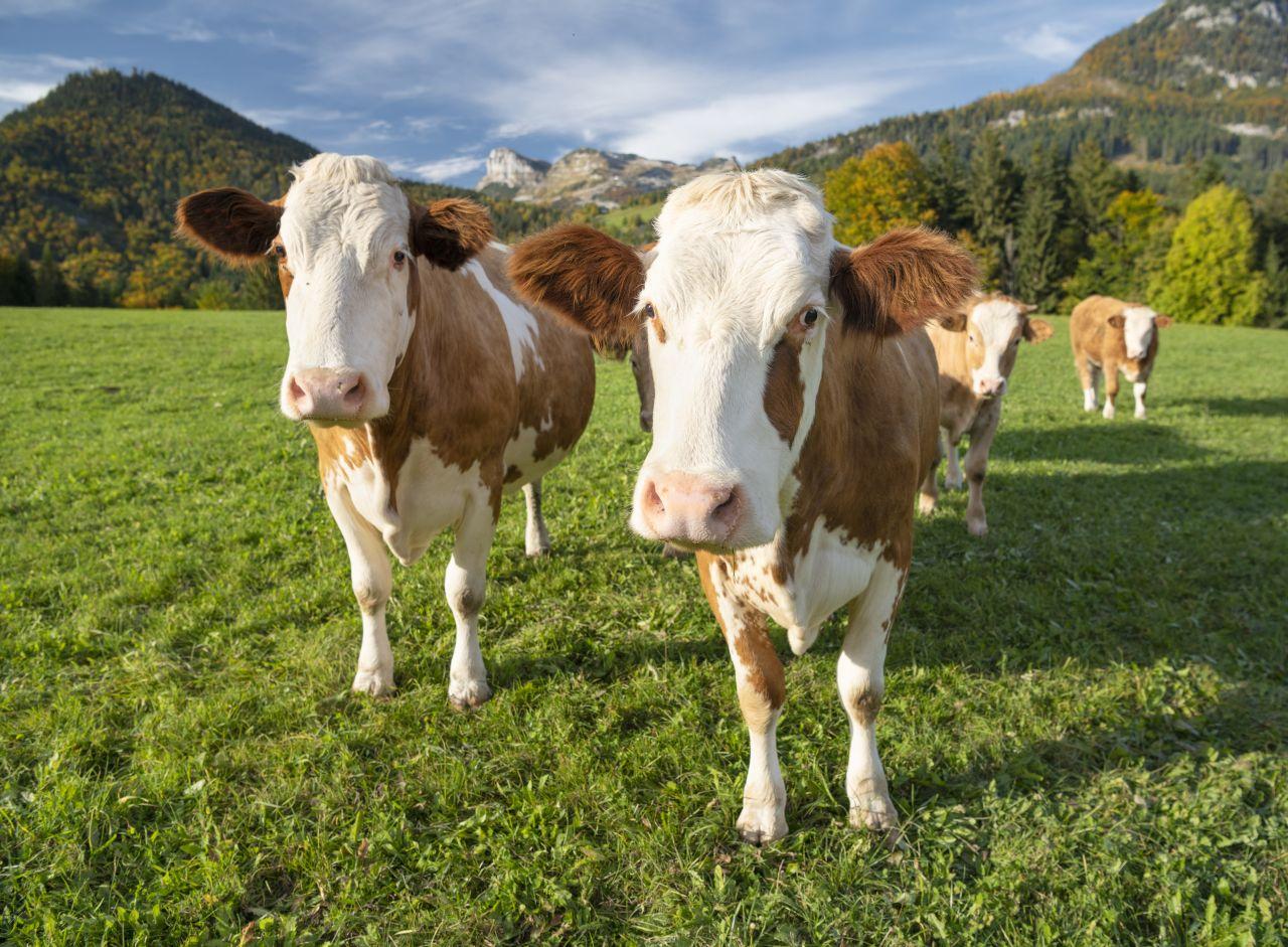 Solidarische Landwirtschaft - du entscheidest, welche Produkte es gibt