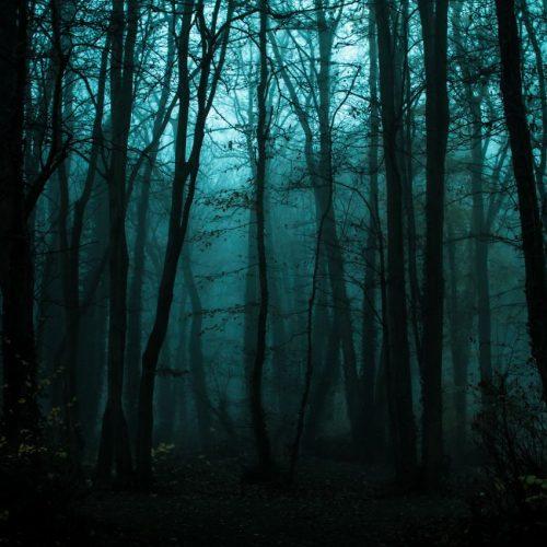 Wald in der Nacht