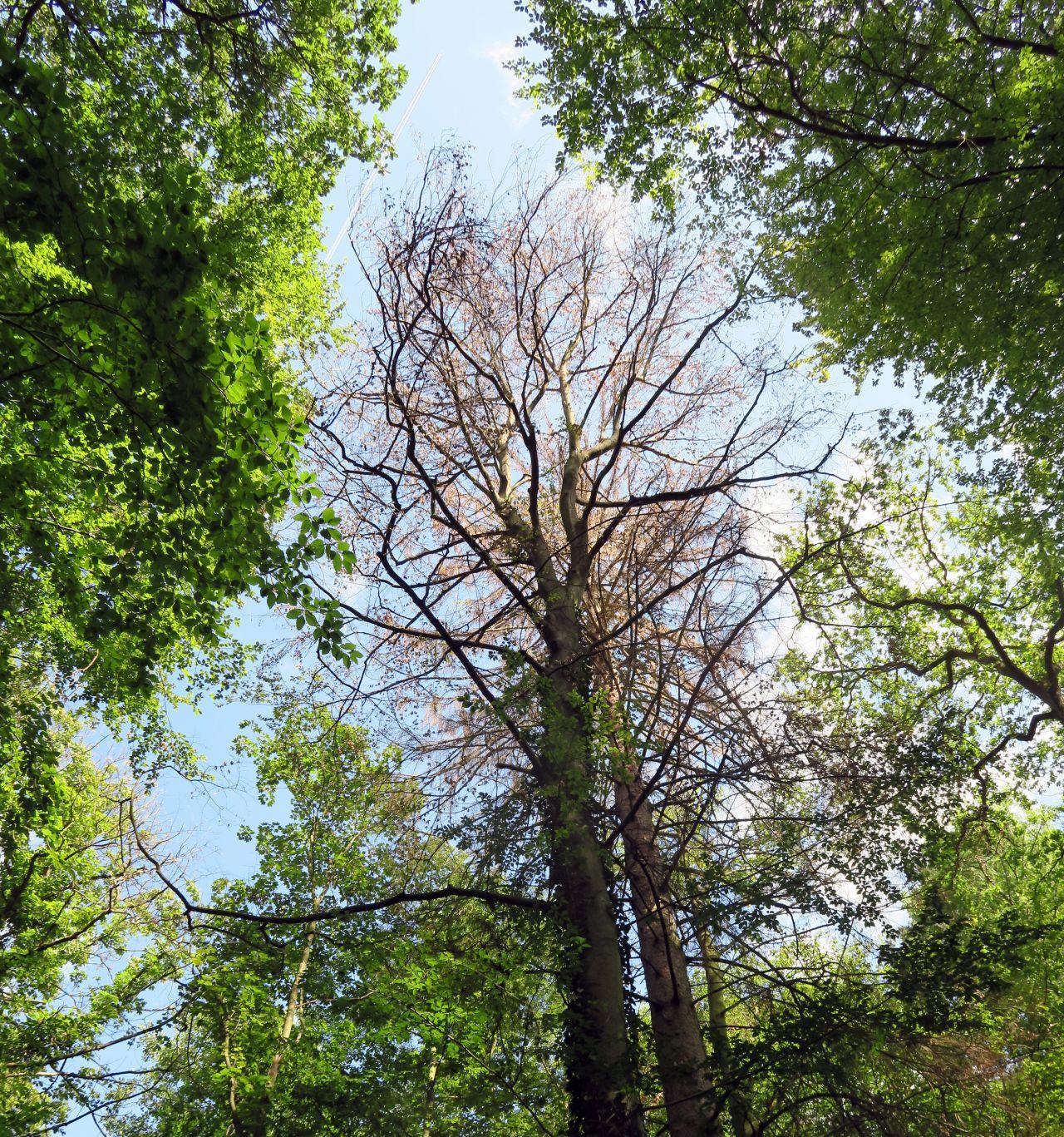 Trockene Bäume Waldsterben Klimawandel