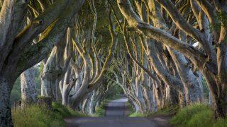 """Der """"Königsweg"""" aus Game of Thrones befindet sich in Nordirland."""
