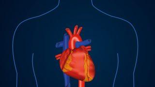 Herz-Kreislauf-System Corona