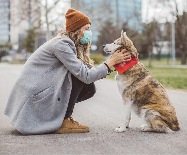 Erste Corona-Fälle bei Haustieren: Darf ich jetzt noch mit Bello kuscheln?