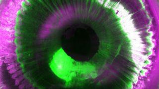 durchsichtige Organe Auge