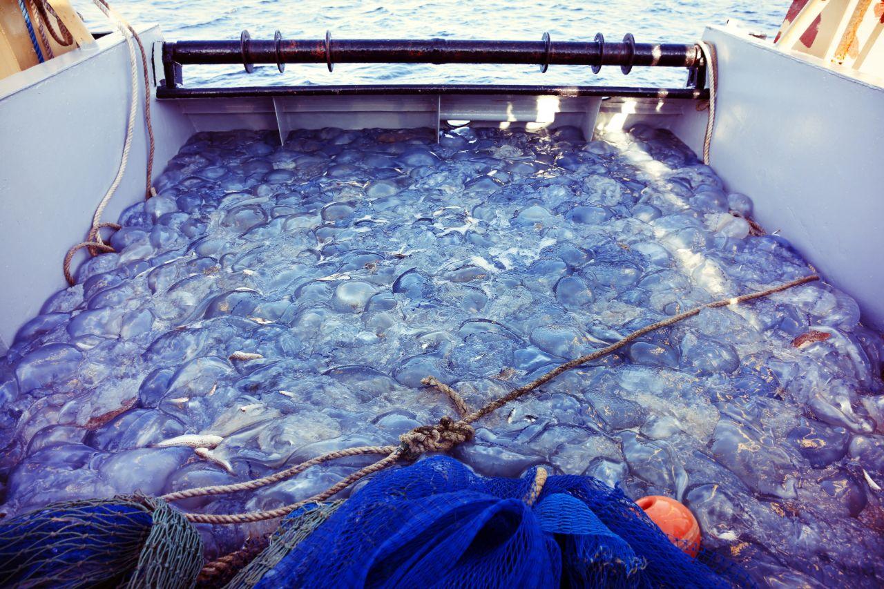 Fischkutter voller Quallen