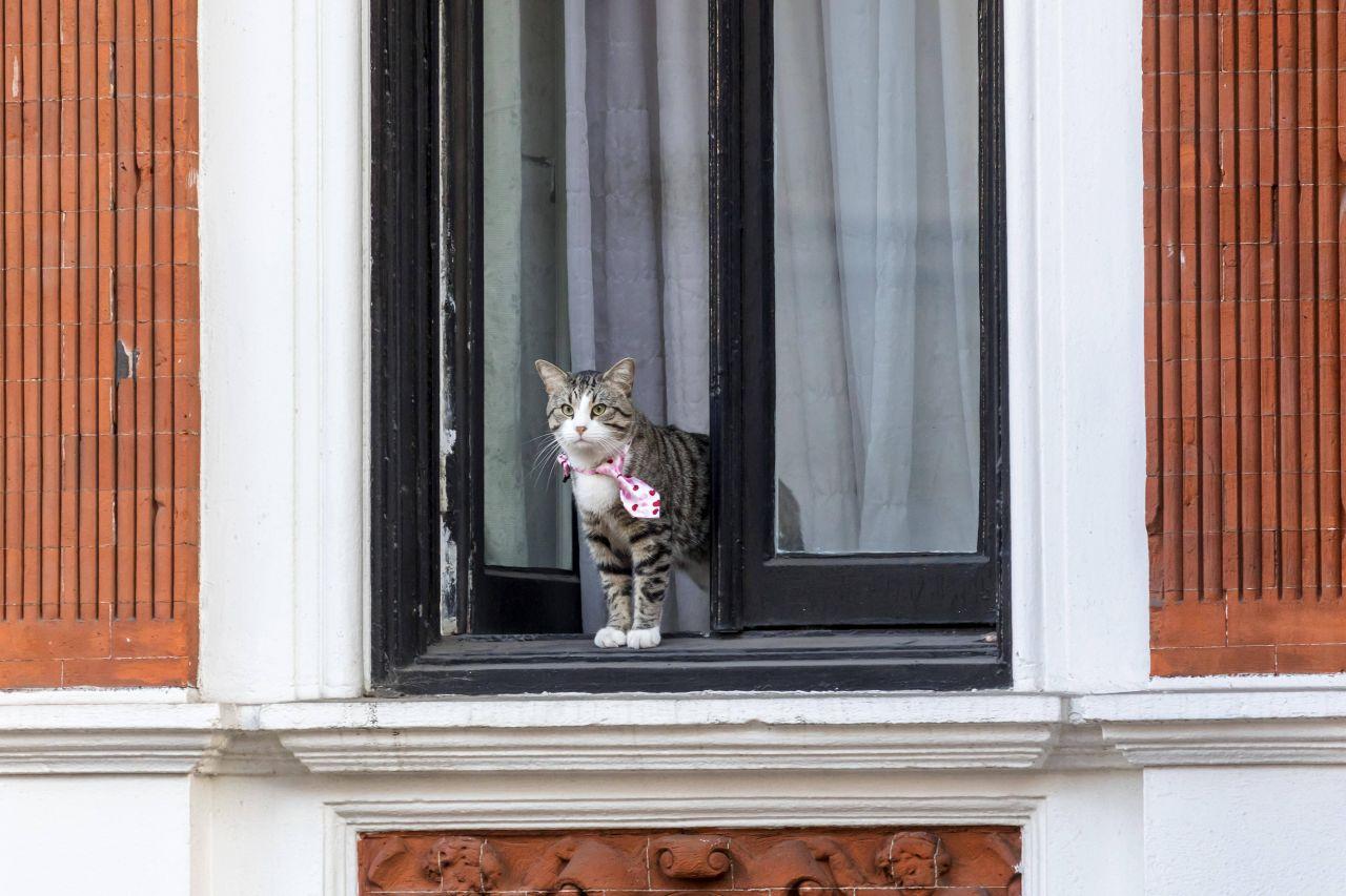 Julian Assange's Katze in der Botschaft.