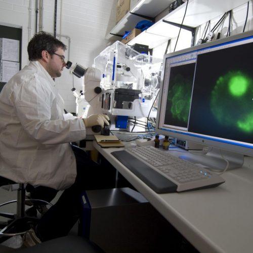 Die Stammzellenforschung ist der Hoffnungsträger der Medizin.