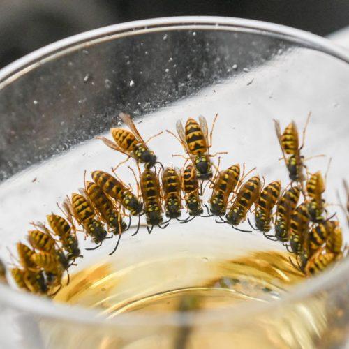 Wespen sitzen in einem Glas mit einer süßen Flüssigkeit.