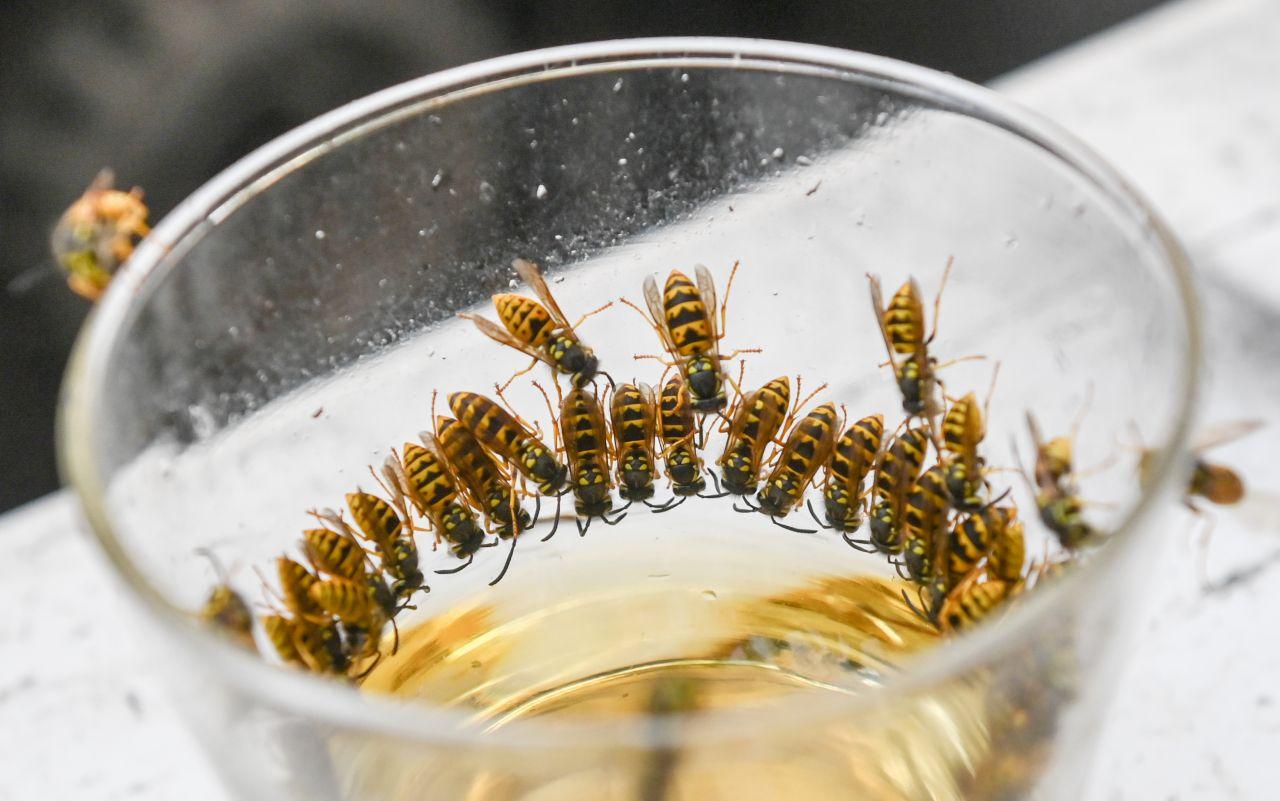 Wespen vertreiben: Diese Mittel helfen gegen Wespen