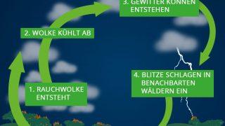 Teufelskreislauf: Busch-Feuer