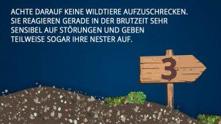Verhaltensregeln im Wald 2