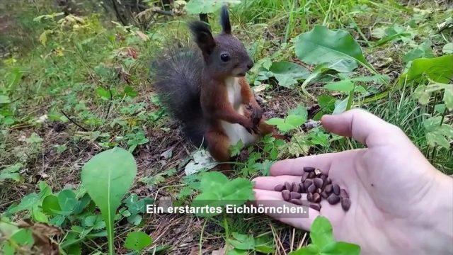 Clips der Woche: Rote Felder in China, versteinerte Eichhörnchen und Zauber-Scheiben