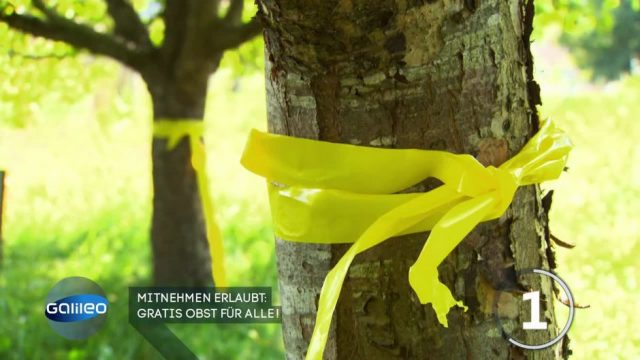 Mitnehmen erlaubt! Darum tragen Bäume jetzt gelbe Bänder