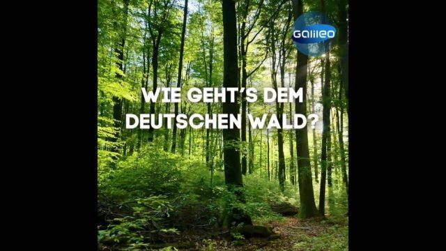 Wie geht's dem Deutschen Wald? Eine Bestandsaufnahme