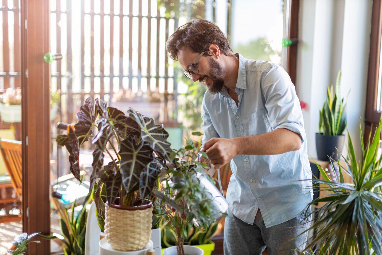 Mann gießt seine Zimmerpflanzen