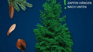 Heimische Bäume: Fichte