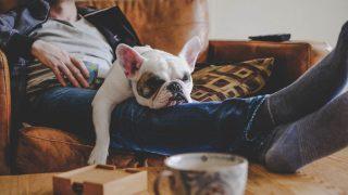 Ein Mann und ein Hund liegen faul auf der Couch.