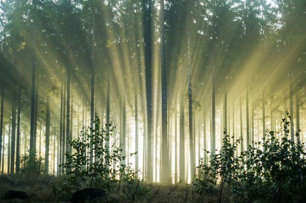 Sonnenlicht, das durch Bäume fällt (Getty Images)