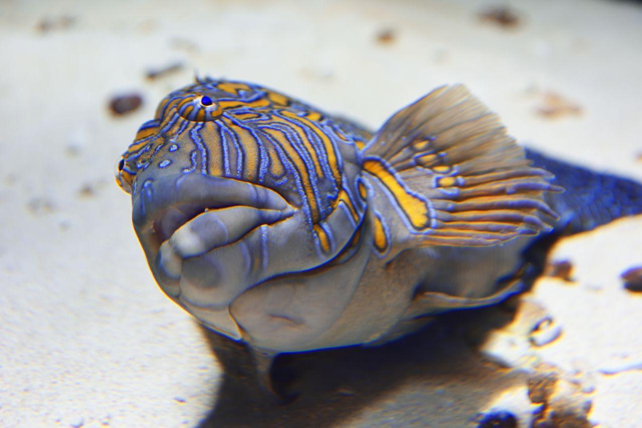 Schlafender Fisch