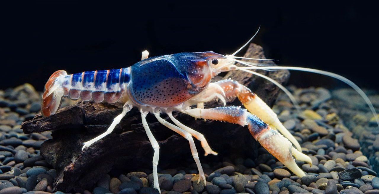 Heringe pupsen, Flusskrebse pinkeln sich an - so crazy kommunizieren Tiere