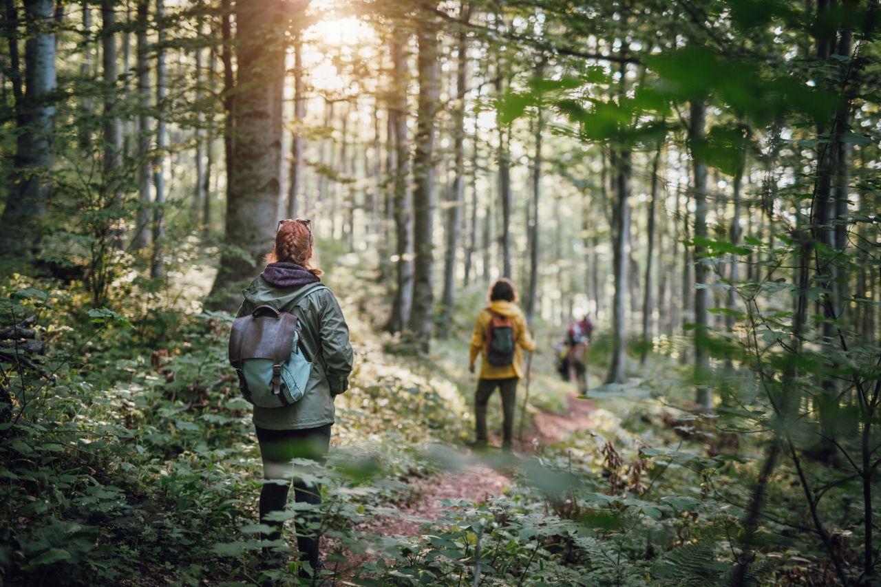 Junge Menschen wandern im Wald