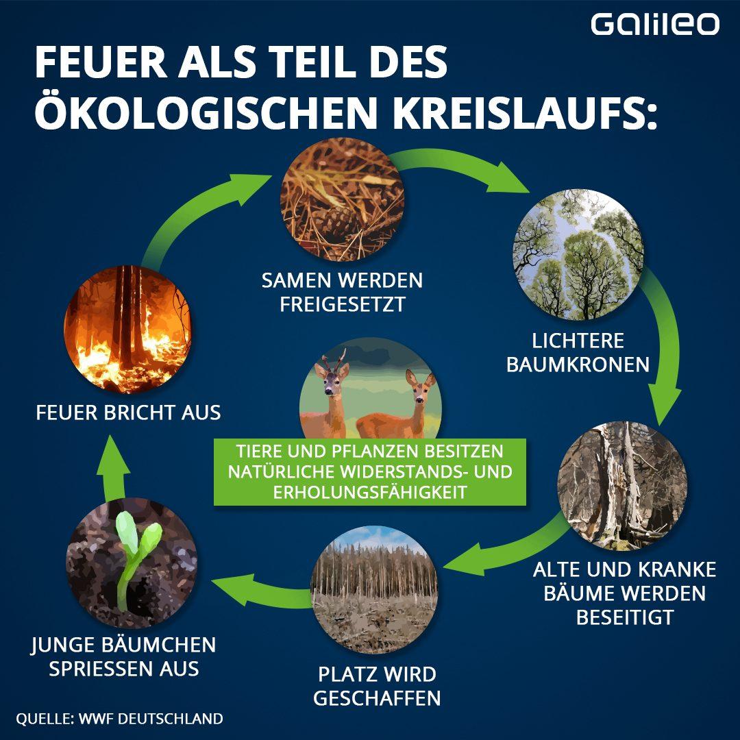 Feuer als Teil des ökologischen Kreislaufs