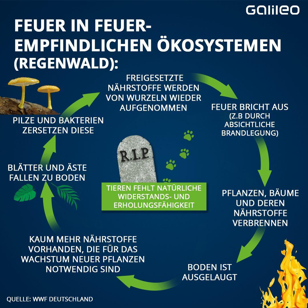 Feuerempfindliches Ökosystem: Regenwald