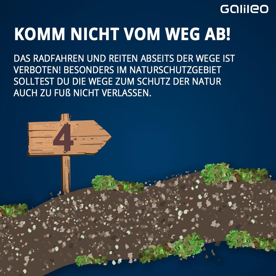 Verhaltensregeln im Wald 3