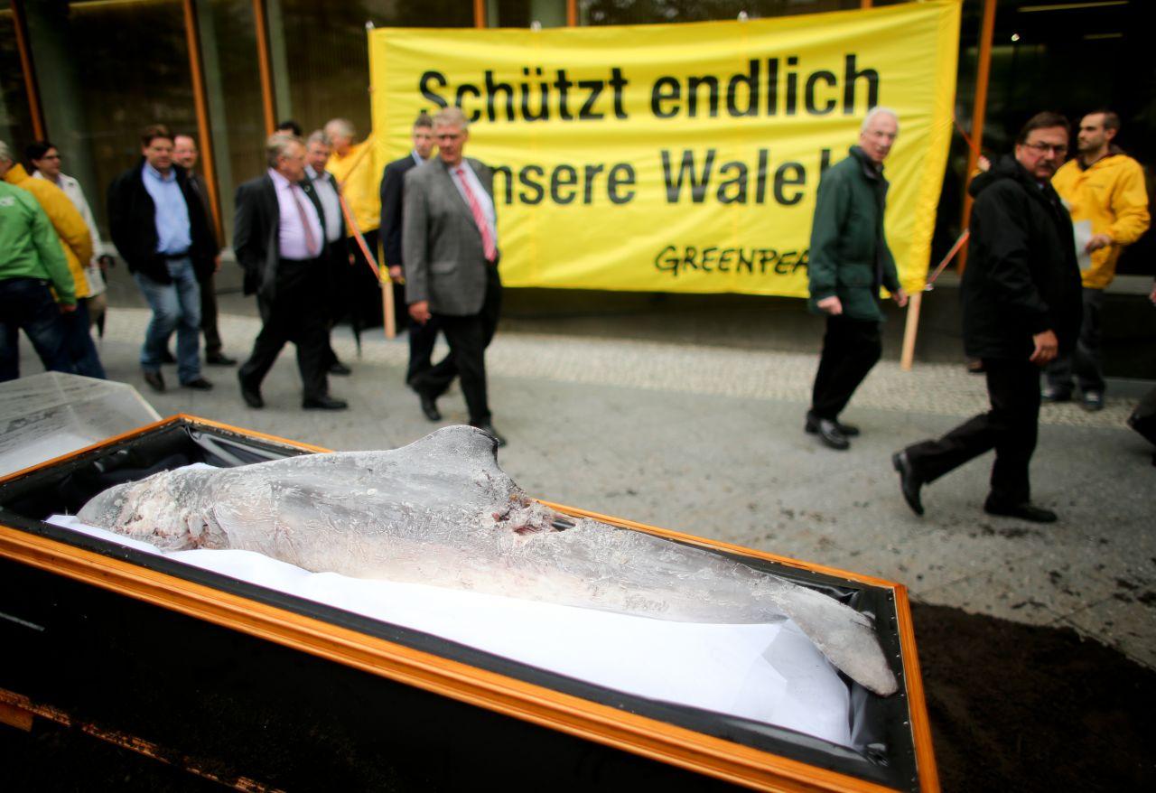 Ein aufgebahrter Wal vor dem Bundeslandwirtschaftsministerium