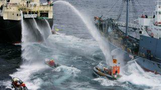 """Greenpeace-Boote """"begleite"""" eine Walfang-Schiff"""