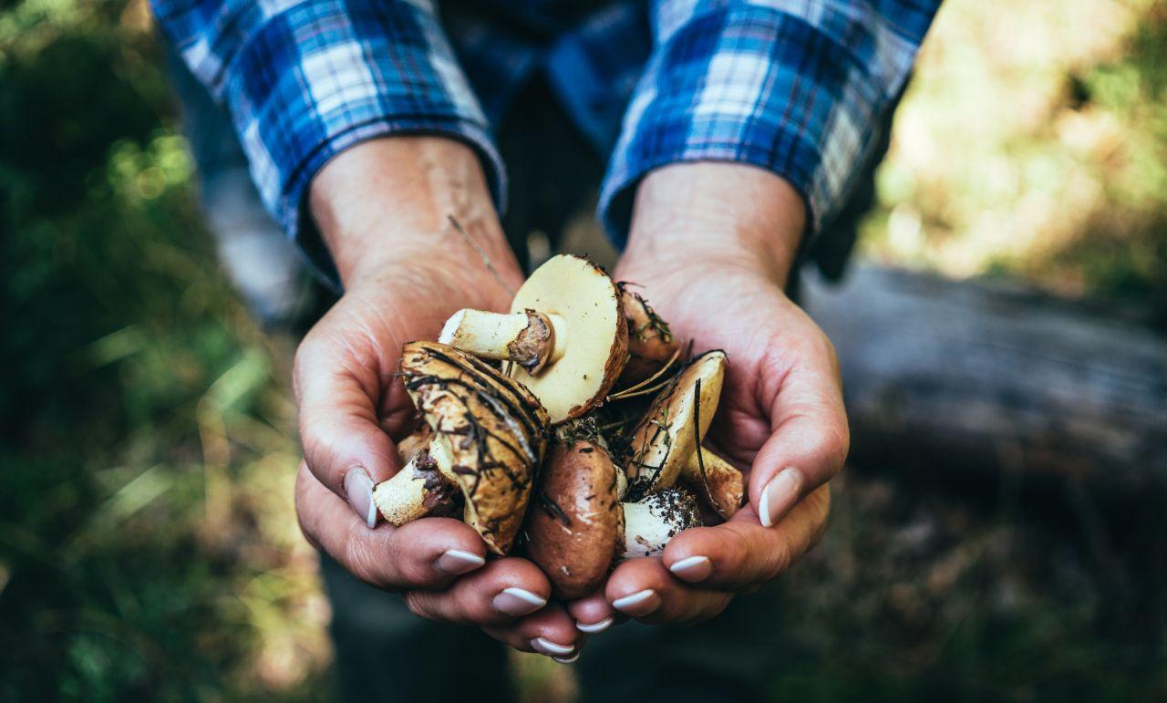 Eine Frau hat Pilze gesammelt