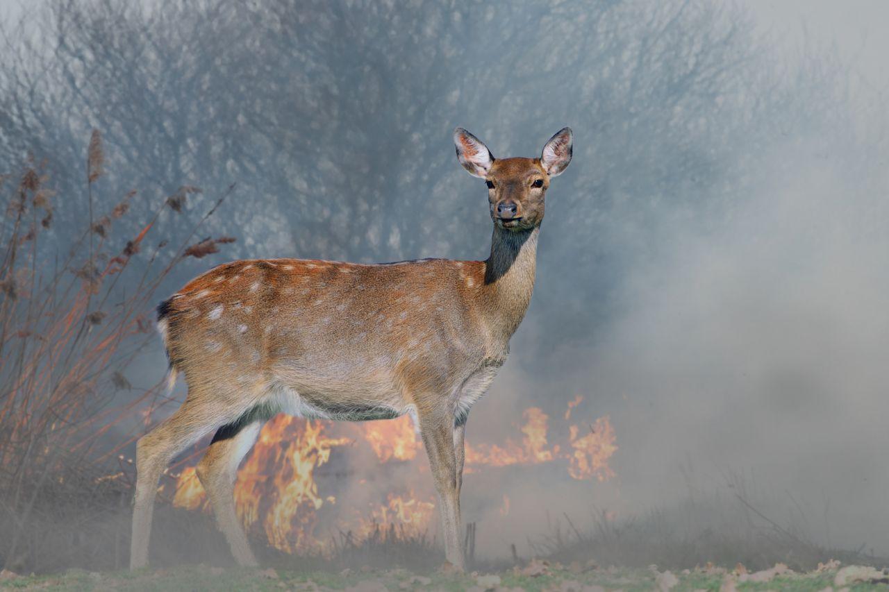 Manche mögen's heiß: Auswirkungen von Waldbränden auf die Natur