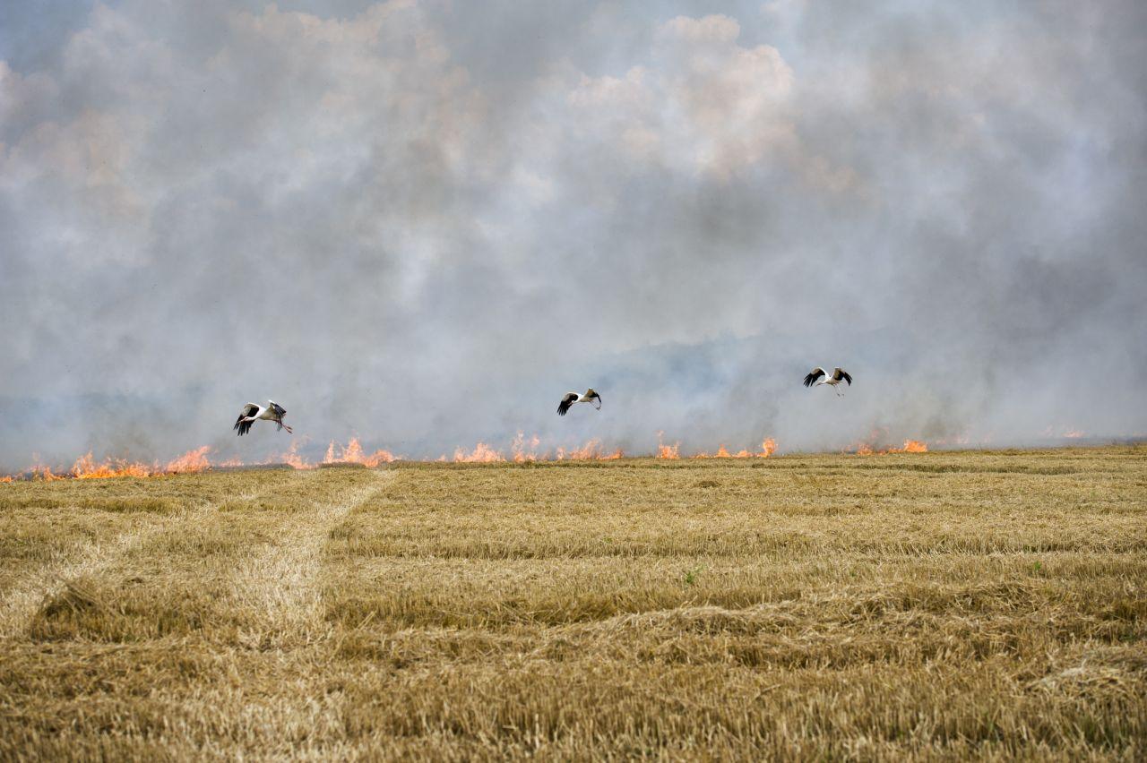 Störche fliegen nah am Feuer.