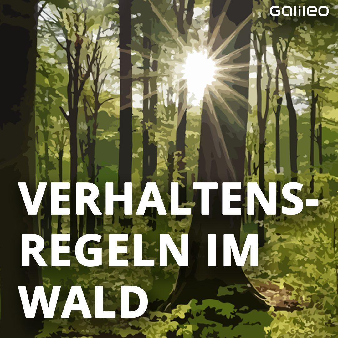 Verhaltensregeln im Wald: Titel