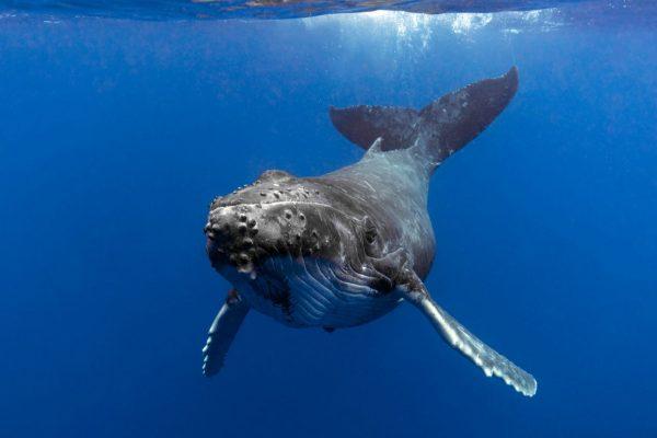 Wale als Klimatretter