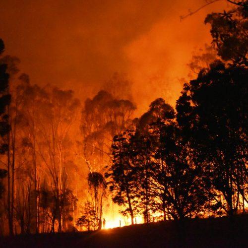 Waldbrand: Bäume stehen in Flammen