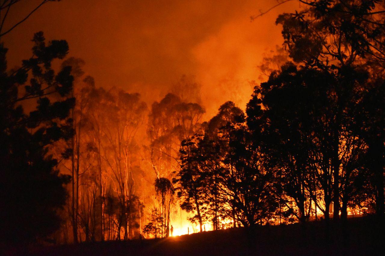 Tierische Feuerwehr: Ziegen und Käfer bremsen Waldbrände aus