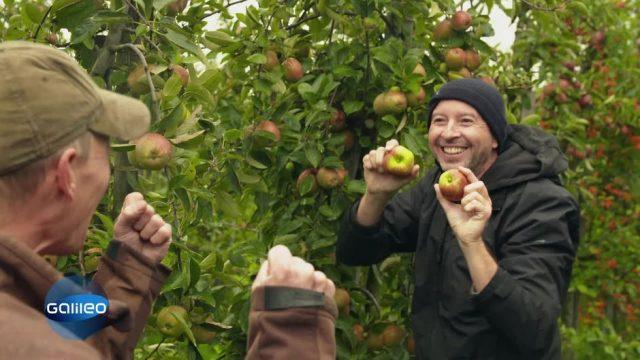 18 Millionen Apfelbäume: Das größte Obstanbaugebiet Deutschlands