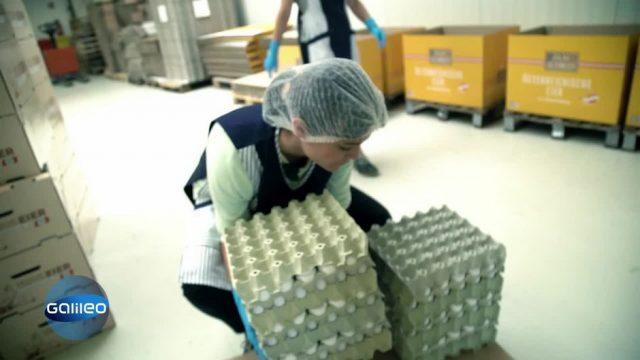 Arbeiten in der größten Eierfabrik Österreichs