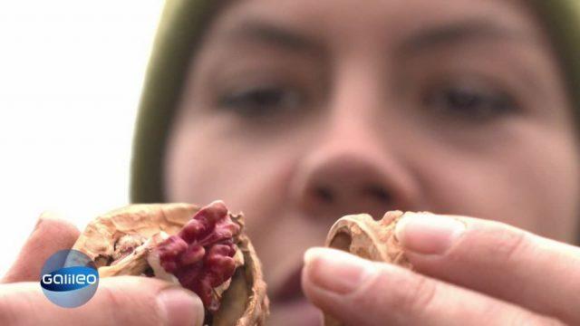 Die Walnuss-Pionierin und ihr Kampf für Nüsse made in Germany