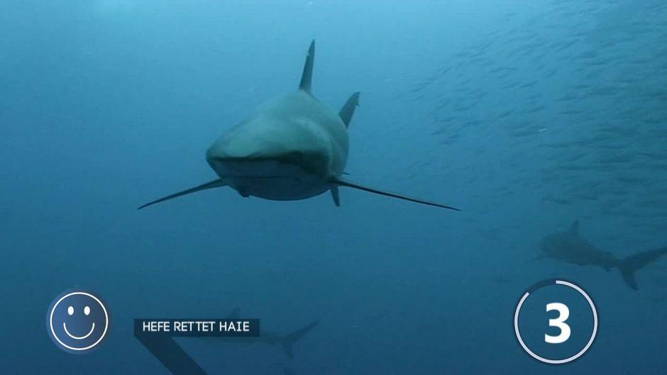 Hefe wird zum Retter der Haie