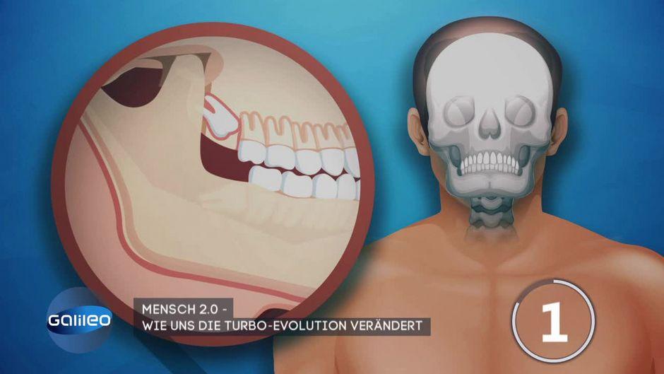 Mensch 2.0: Wie uns die Evolution verändert