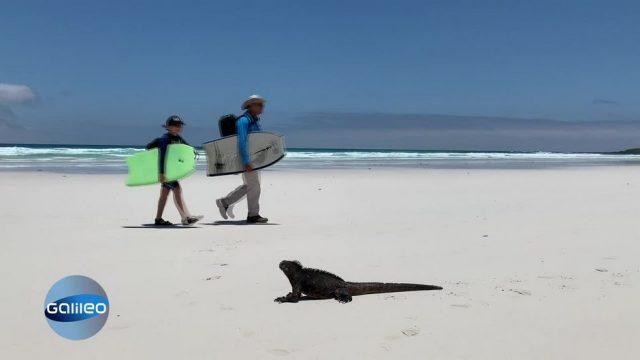 Traumstrand ohne Gäste: Beliebte Reiseziele während Corona