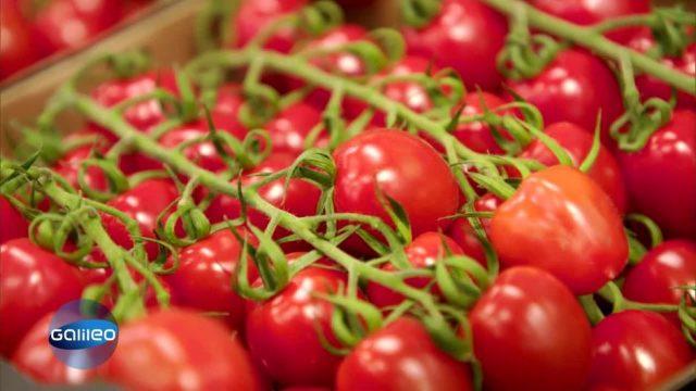 Warum haben Tomaten kaum noch Nährstoffe?