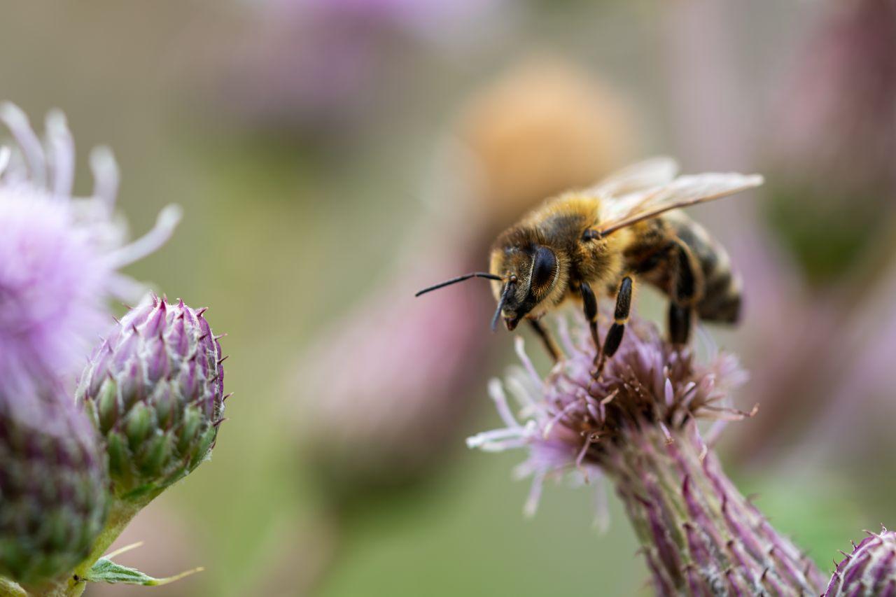 Eine Biene sitzt auf einer Blume.