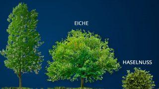 Alba Trüffel wächst unter bestimmten Baumarten